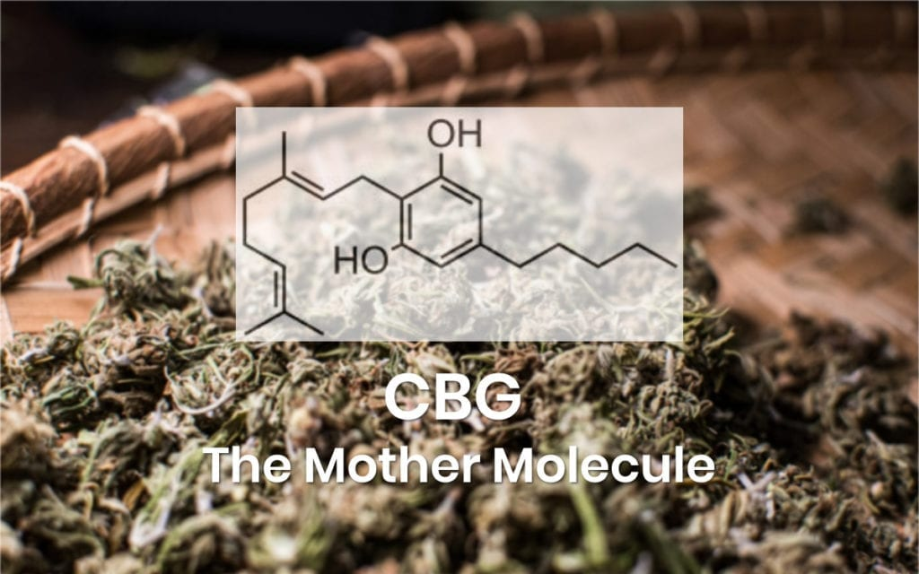CBG The Monther Molecule