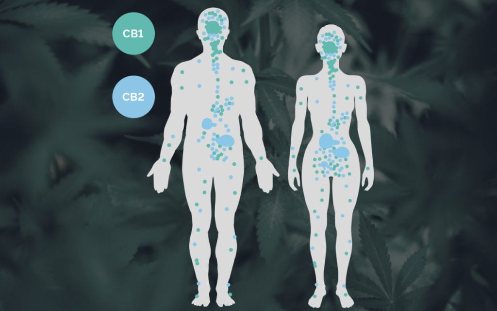 clinical endocannabinoid deficiency in human bodies