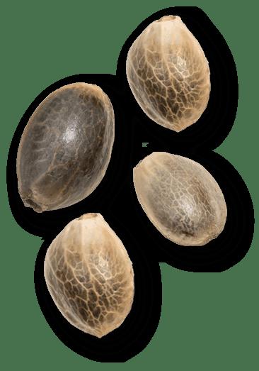 Vesl Oils Seed