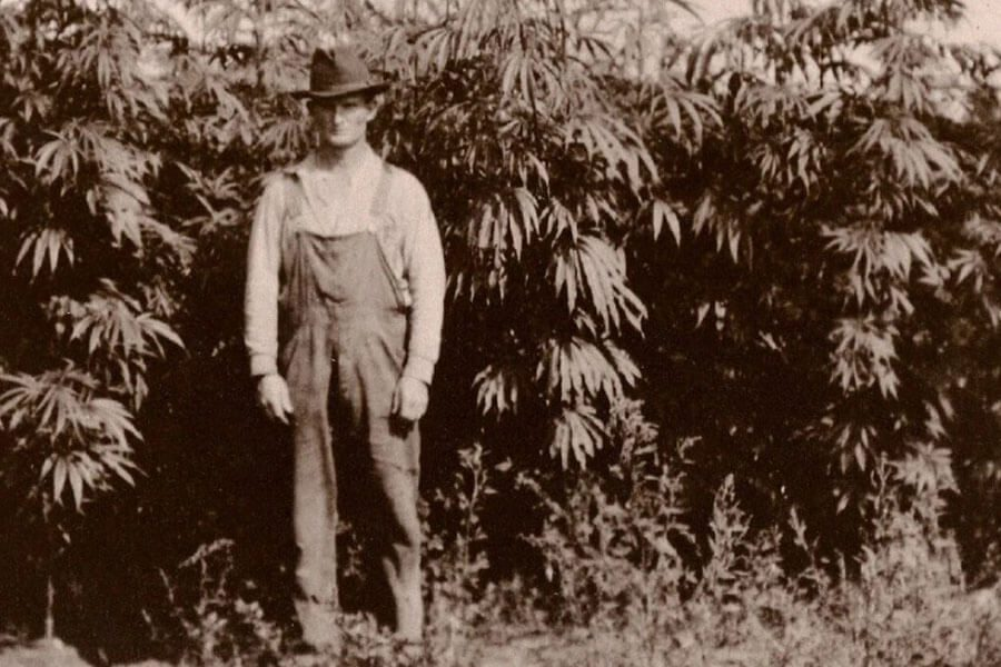 european hemp farmer